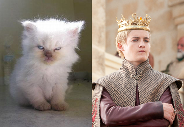 A Game of Thrones characters as cats - picture 1