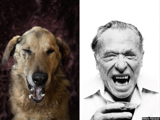 Dogs and famous writers - Charles Bukowski
