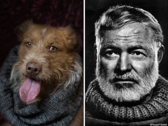 Dogs and famous writers - Ernest Hemingway