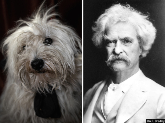 Dogs and famous writers - Mark Twain