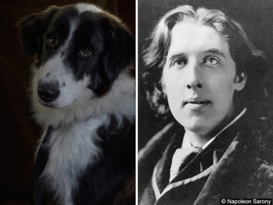 Dogs and famous writers - Oscar Wilde