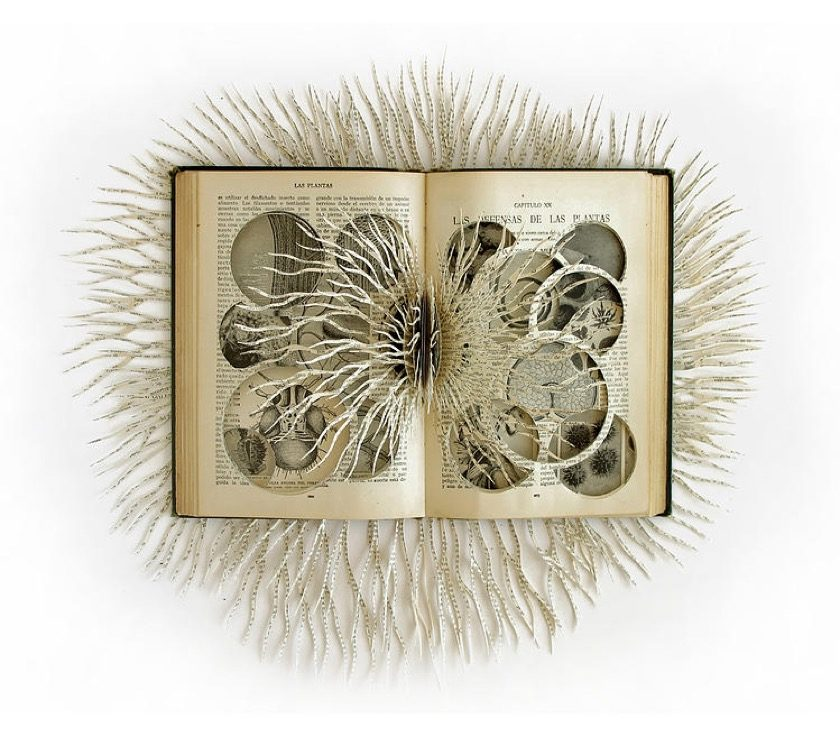 Book sculpture by Barbara Wildenboer - Las Defensas de las Plantas