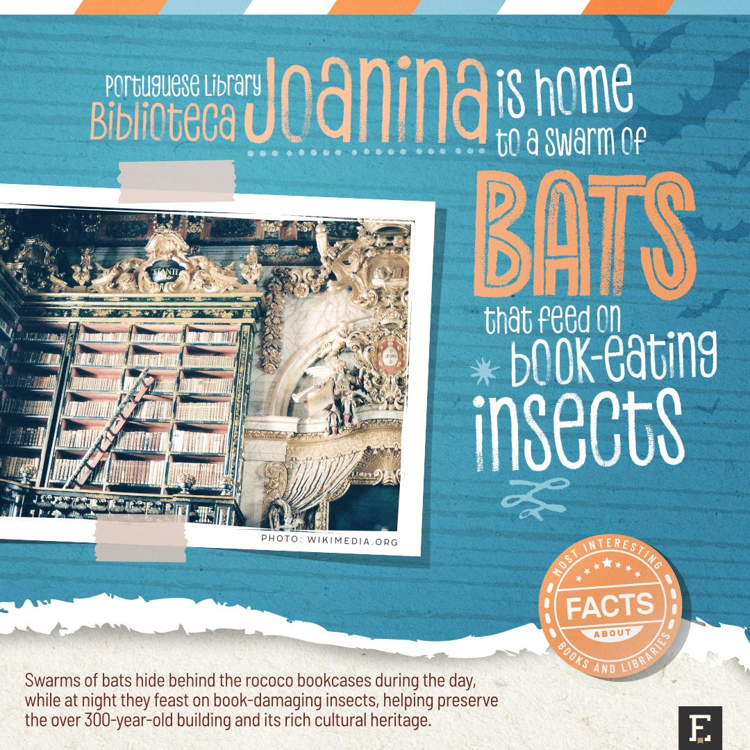 Joanina Library bats - fun facts about libraries